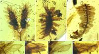 New Green Lacewing Larva and Potential Model Plants from Burmese Amber
