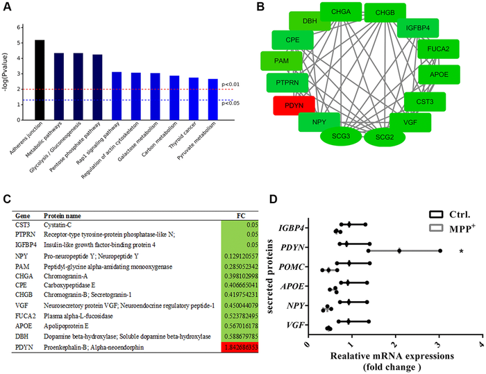 Enrichment and PPI analysis of 56 significantly differentially expressed secretory granule proteins and 140 secreted proteins