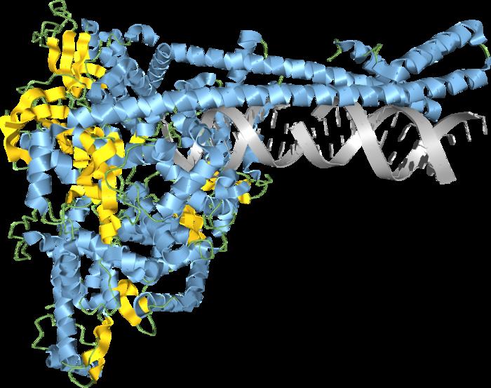 SARS-CoV-2 RNA synthesis compex