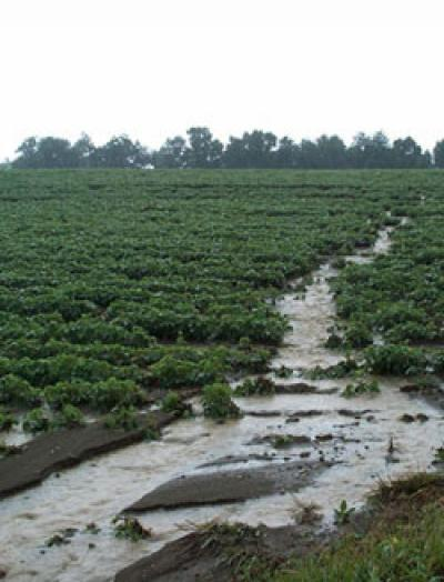Runoff from Reduced-Input Watershed