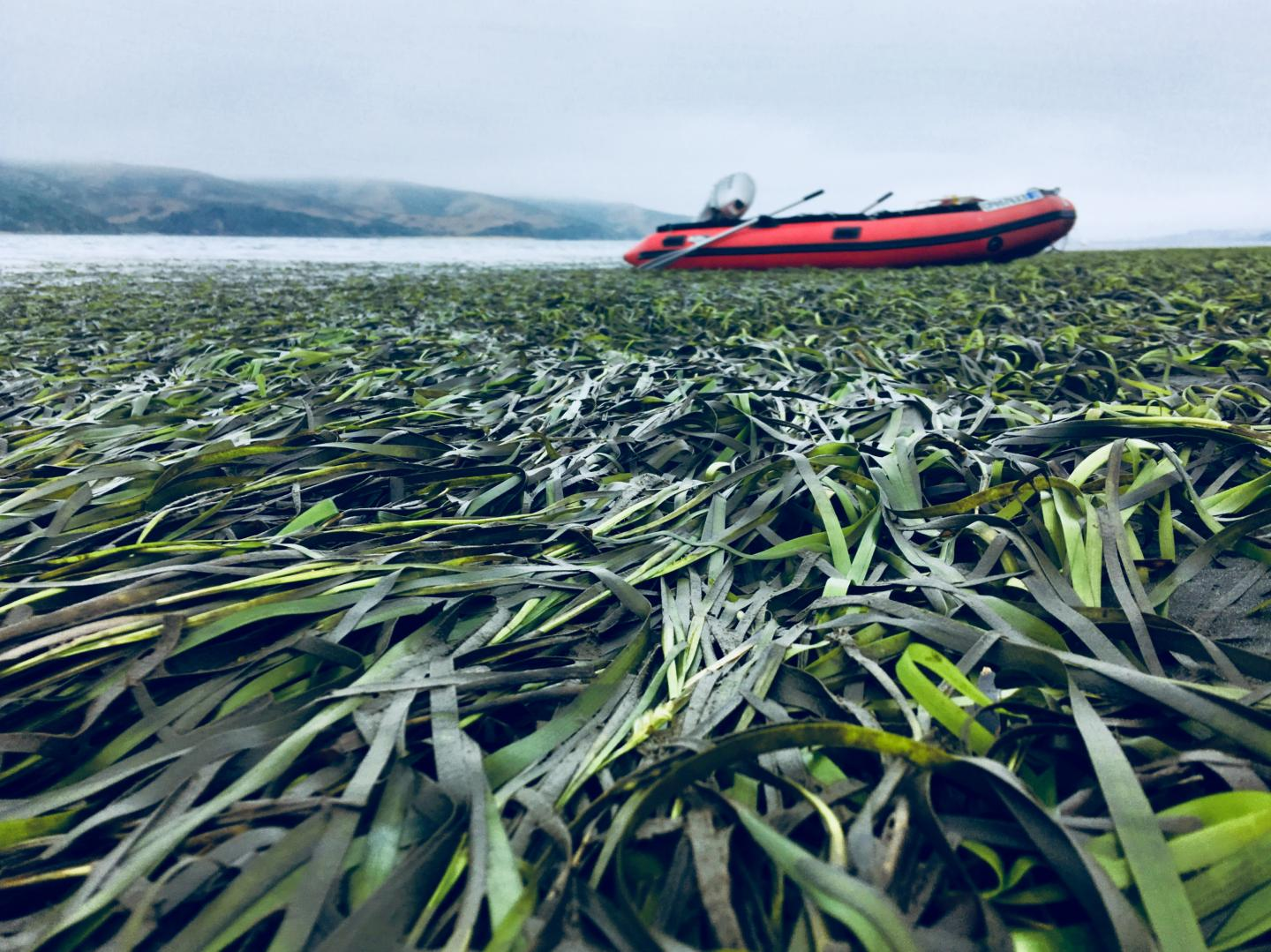 Seagrass with red boat