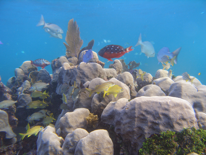 Coral Microbiome Is Key to Surviving Climate Change, New Study Finds