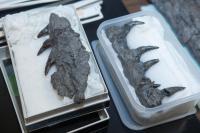 Mosasaur (2 of 2)