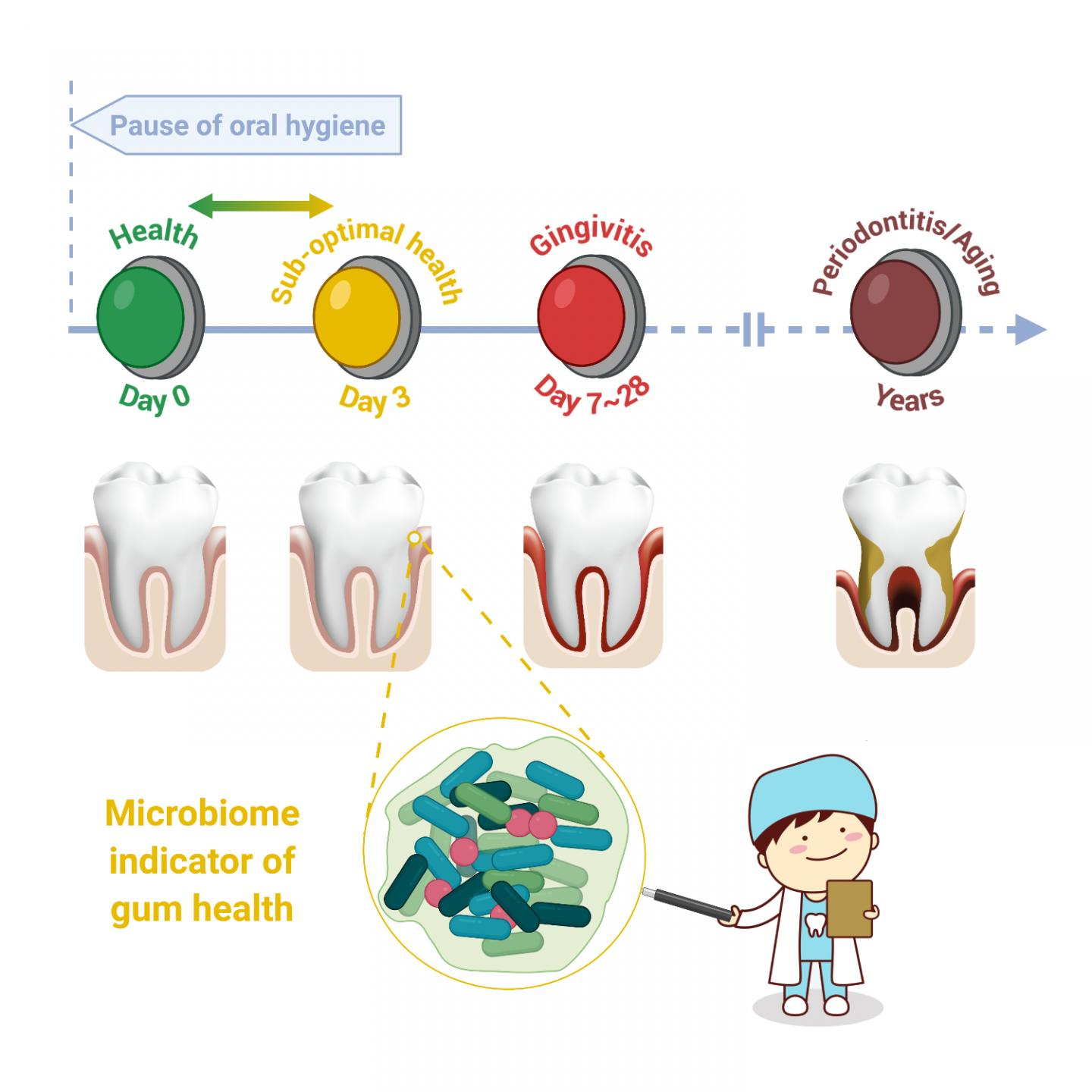 24-72 hours of poor oral hygiene impacts oral health