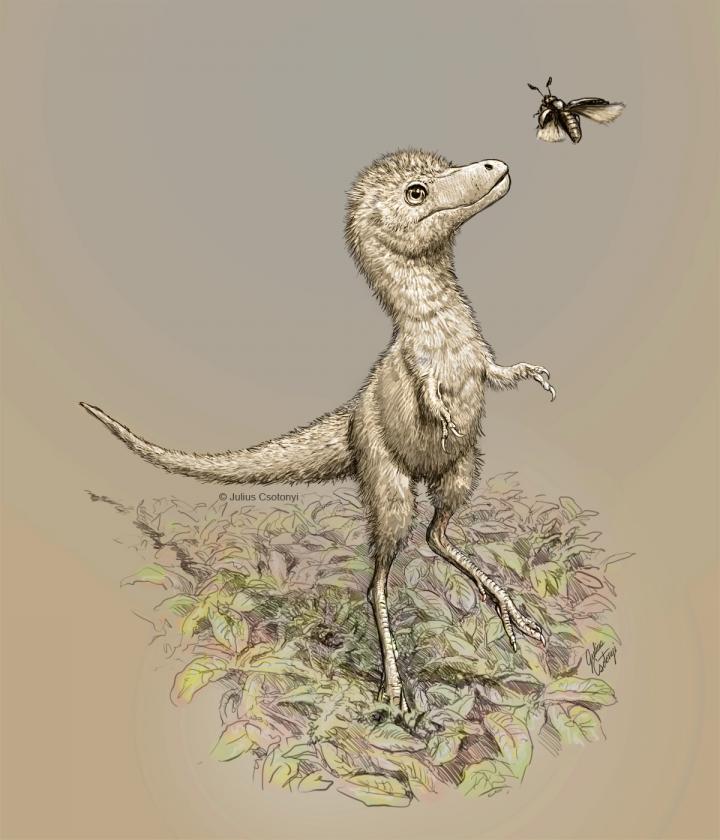 Baby tyrannosaur