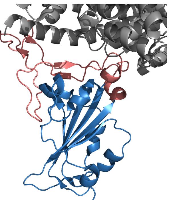 The SARS-CoV-2 receptor-binding domain