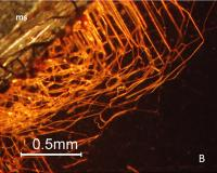 Intricate Tiny Tunnels inside Garnet Crystals Appear to Be the Result of Boring Microorganisms (2/2)
