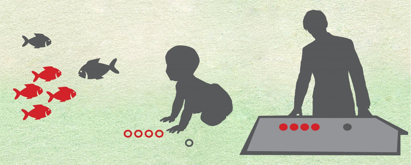 Adult Subcortex Processes Numbers with the Same Skill As Infants, Other Lower-Order Species