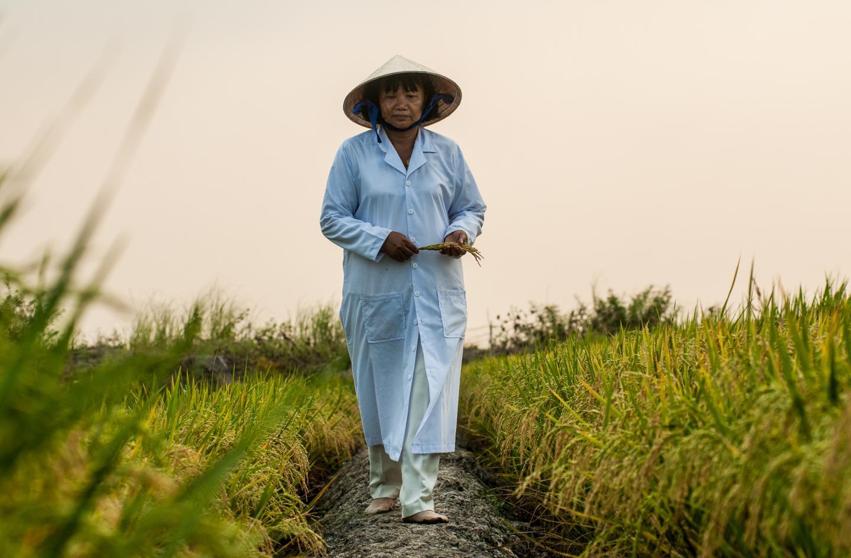 Testing Rice Varieties in Vietnam