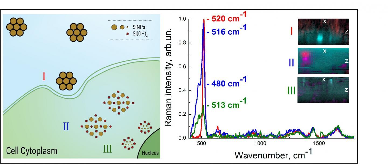 Silicon Nanoparticles