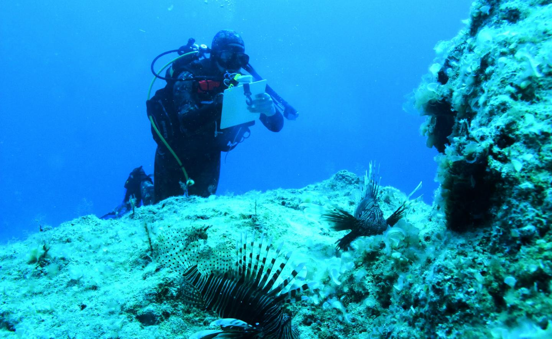 Visual census of lionfish