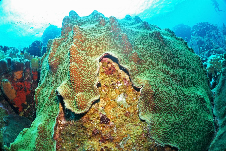 Coral and Algae Compete
