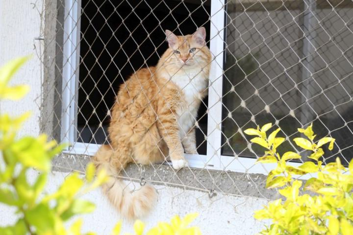 Questionnaire Survey Identifies Potential Separation-Related Problems in Cats