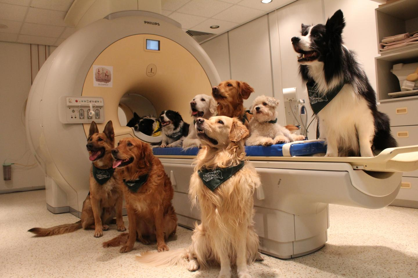 Dogs Understand Both Vocabulary and Intonation of Human Speech (1 of 3)