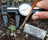 Taking Plant Measurements