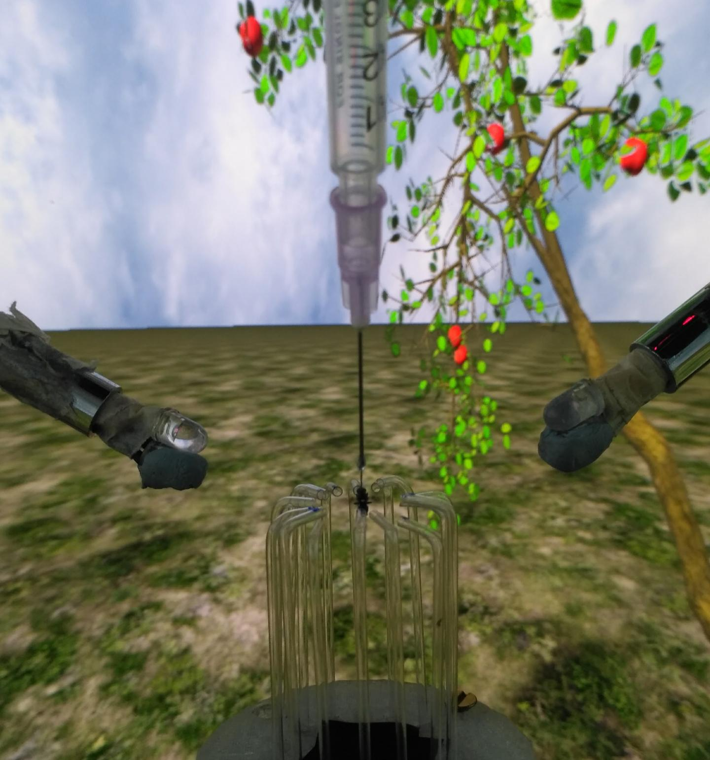 A tethered apple fly (Rhagoletis pomonella) responding to airflow and odour stimuli in a multimodal virtual reality arena.