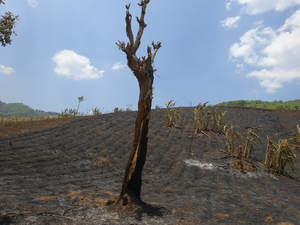 Land cleared through burning