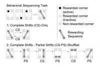 Schematic of the behavioral tasks