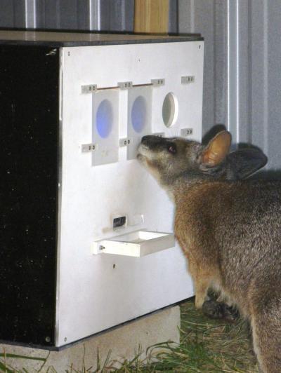 Wallaby Color Vision