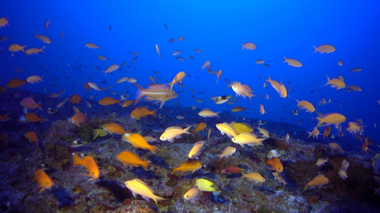 Kure Atoll Reef