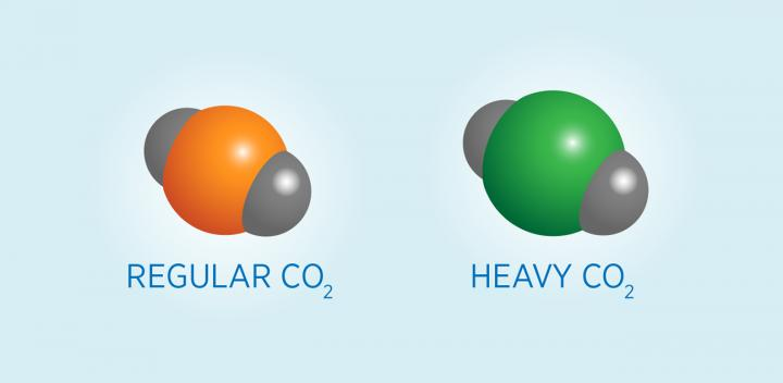 Carbon Atoms Occur in Heavy and Light Forms