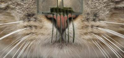 E-whiskers