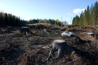 Dartmouth Clear Cutting Forest Study