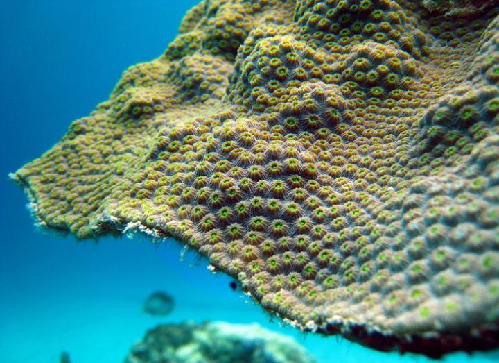 Closeup of Coral