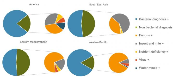 Breakdown of Problems against Which Antibiotics Were Recommended by Region