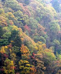 Mixed Beech Forest in China