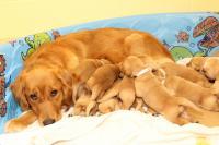 Tough Love Moms