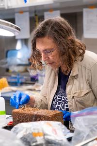 Dr. Levin in the wet lab aboard R/V Falkor