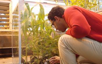 Researchers Grow Maize and Soybeans