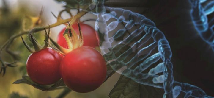 Decoding crop genetics