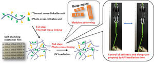 Figure 1: Dual-Thermal and Photo-crosslinking of polymer chains for synthesis of versatile elastomer