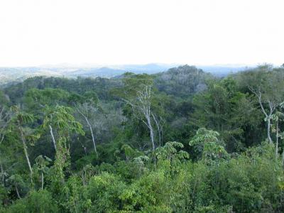 Belize Rainforest Canopy