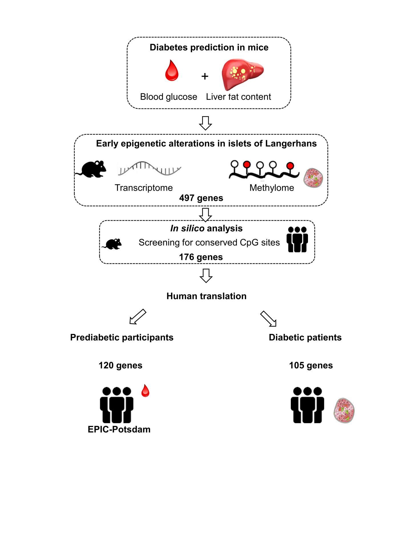Epigenetic Changes Precede Onset of Diabetes