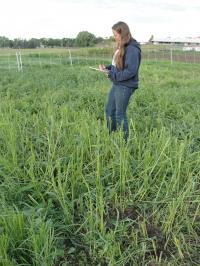 Researcher in Forage Field