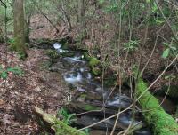Ecosystem Services in Streams