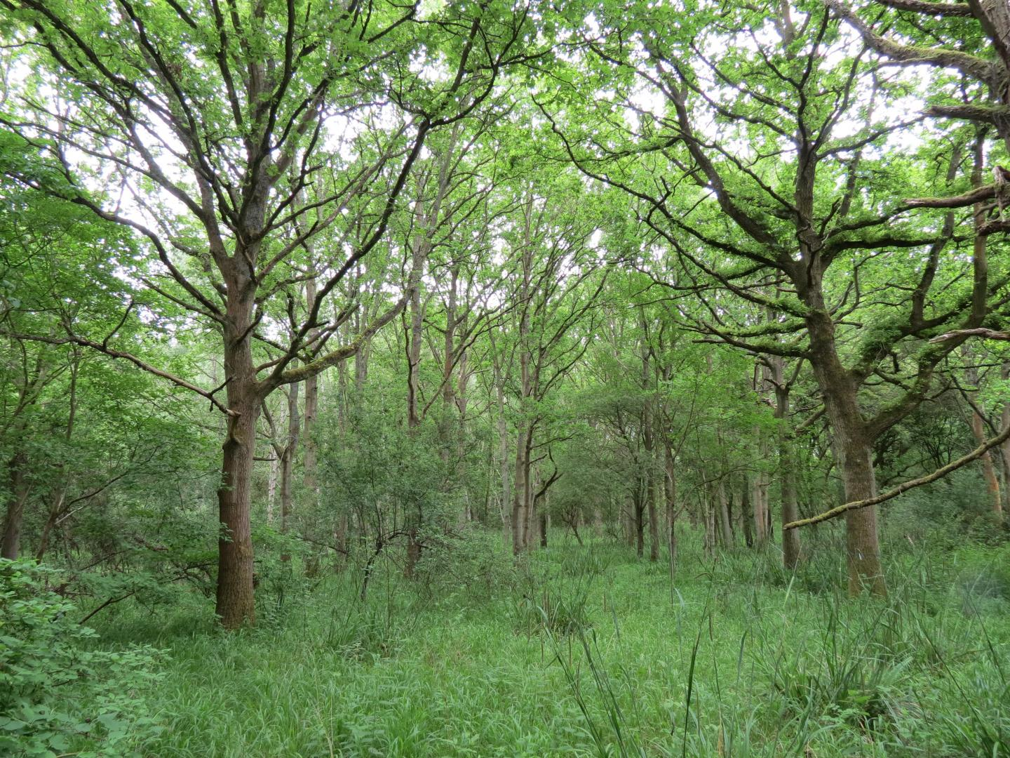 Woodland growth after 59 years