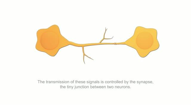 Mimicking Neurons with an Artificial Synapse