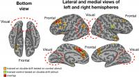 Areas of the Brain Supporting Significant Cross-Decoding of Illusory and Matched Physical Paths