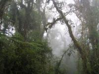 Andean Forest in Peru