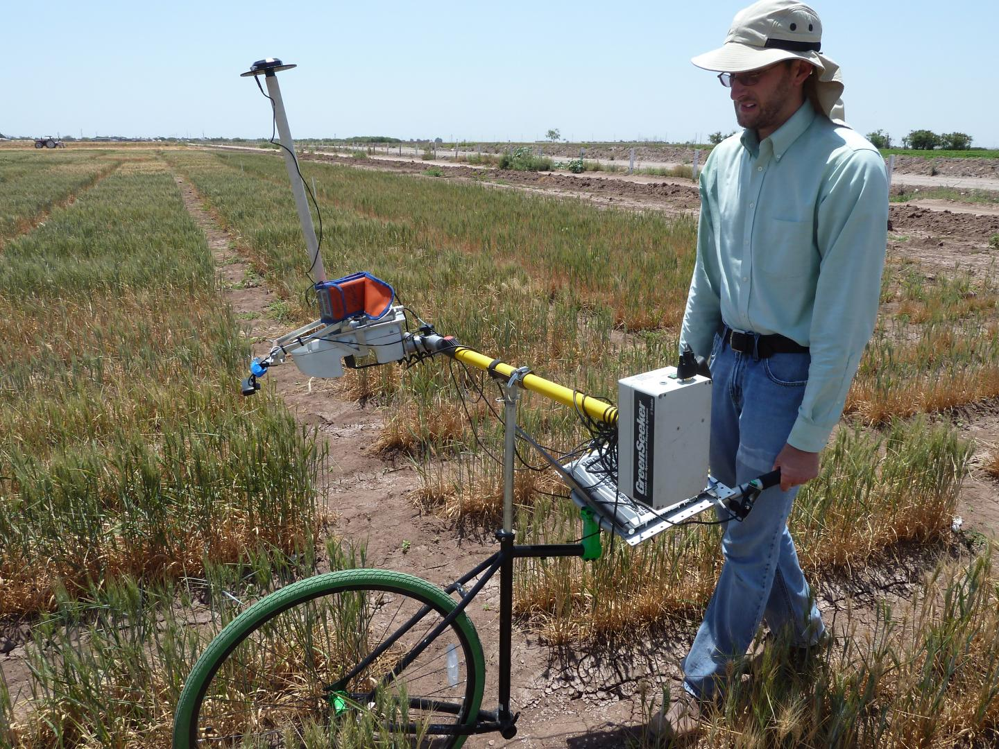 Phenocart in Drought Field