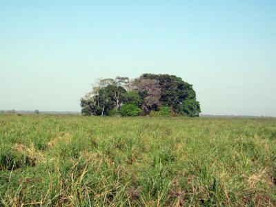 Hidden Shell Middens Reveal Ancient Human Presence in Bolivian Amazon (1 of 2)