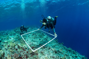 Over 200 scientists helped survey over 1,000 reefs on the Global Reef Expedition