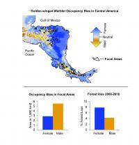 Golden-winged Warbler Occupancy Bias in Central America