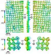 Bioactive Protein Lattices Nanoscale Tomography