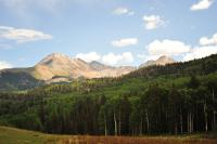 Studying An Aspen In Colorado