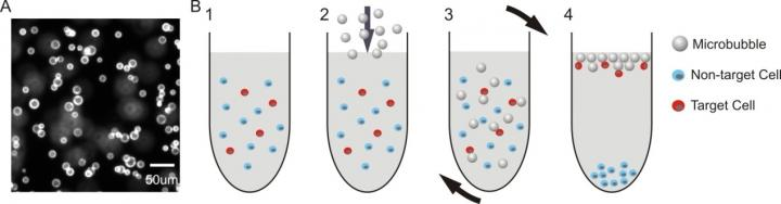 Glass Microbubbles Labeled with PE-Conjugated Biotin and Schematic of Bouyancy
